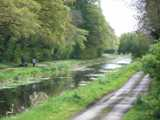 Royal_Canal_Westmeath.jpg